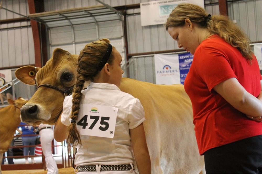 4-H Dairy Show