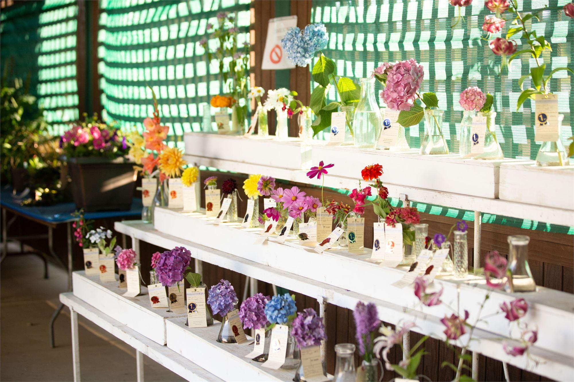 Photo: shelves of flowers in vases for show