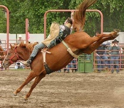 Photo: Cowboy on bucking bronco