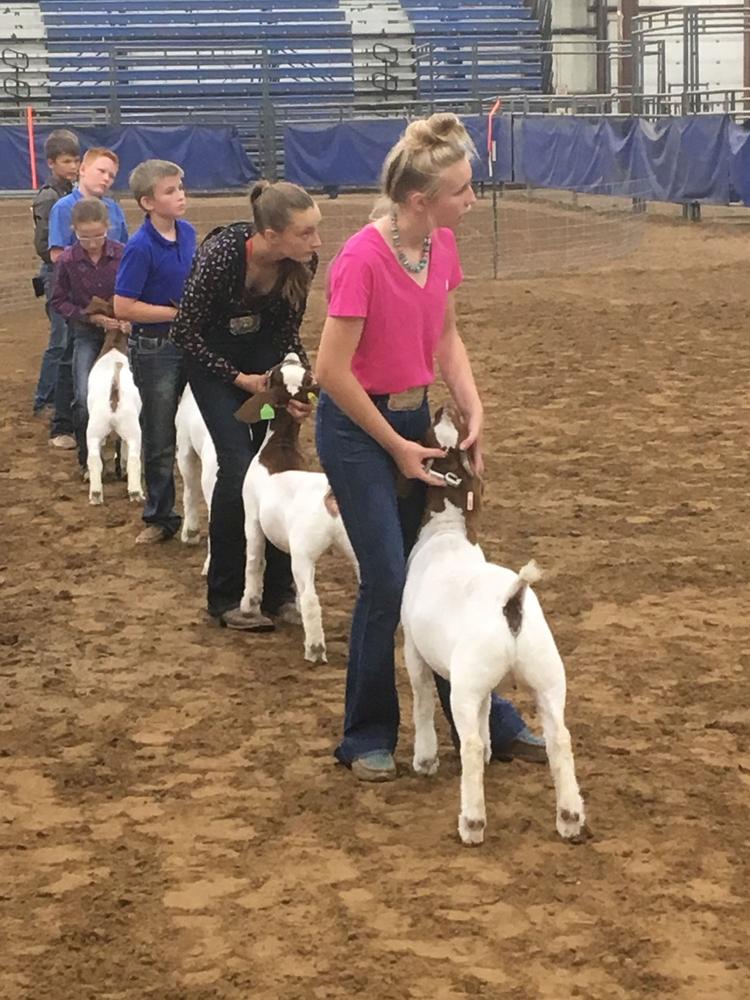 A tough market goat class.