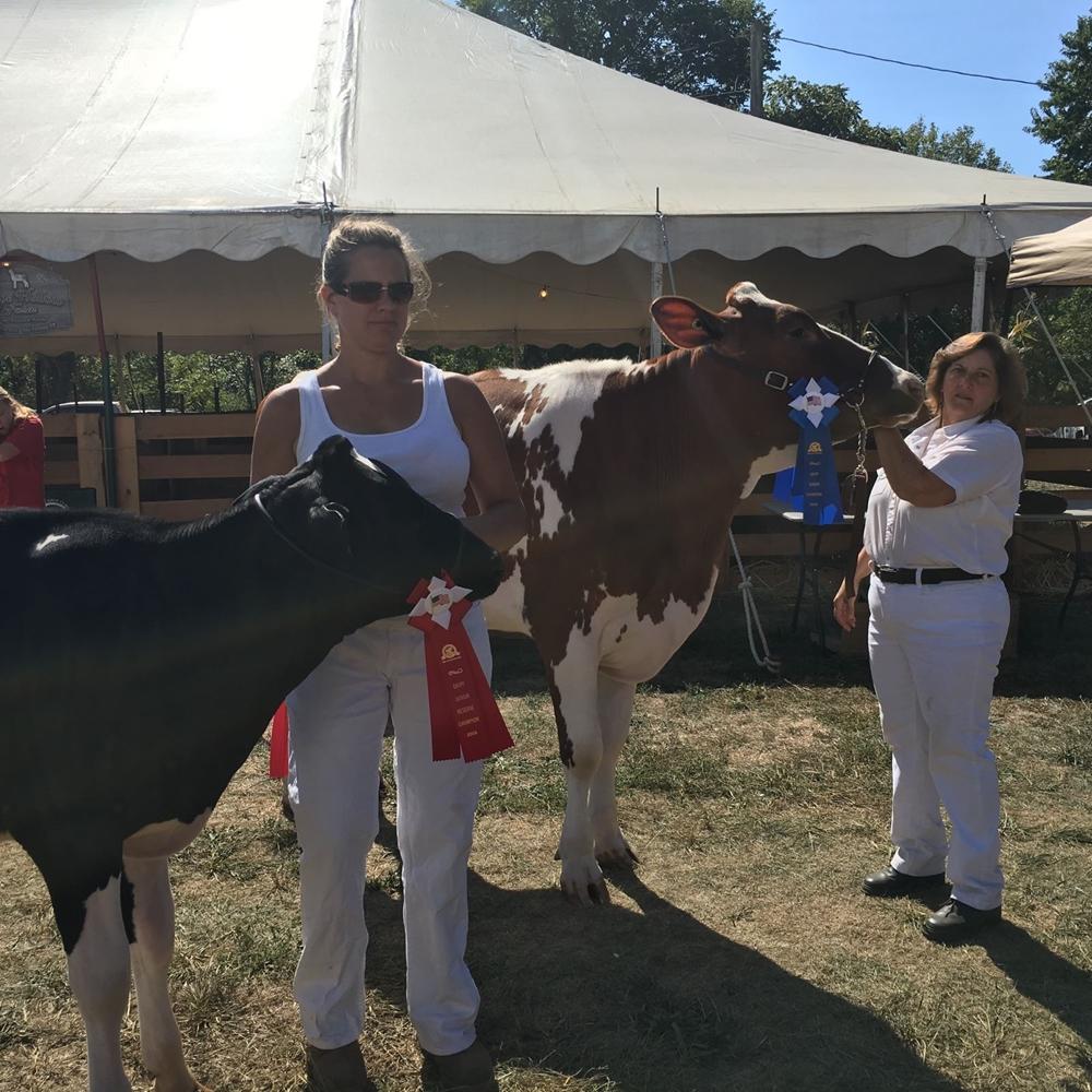 Guilford Fair Dairy Cattle Show 2016