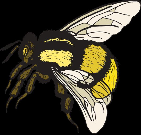Honey Bee Exhibit