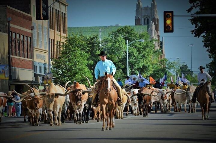 Cattle Drive 2015