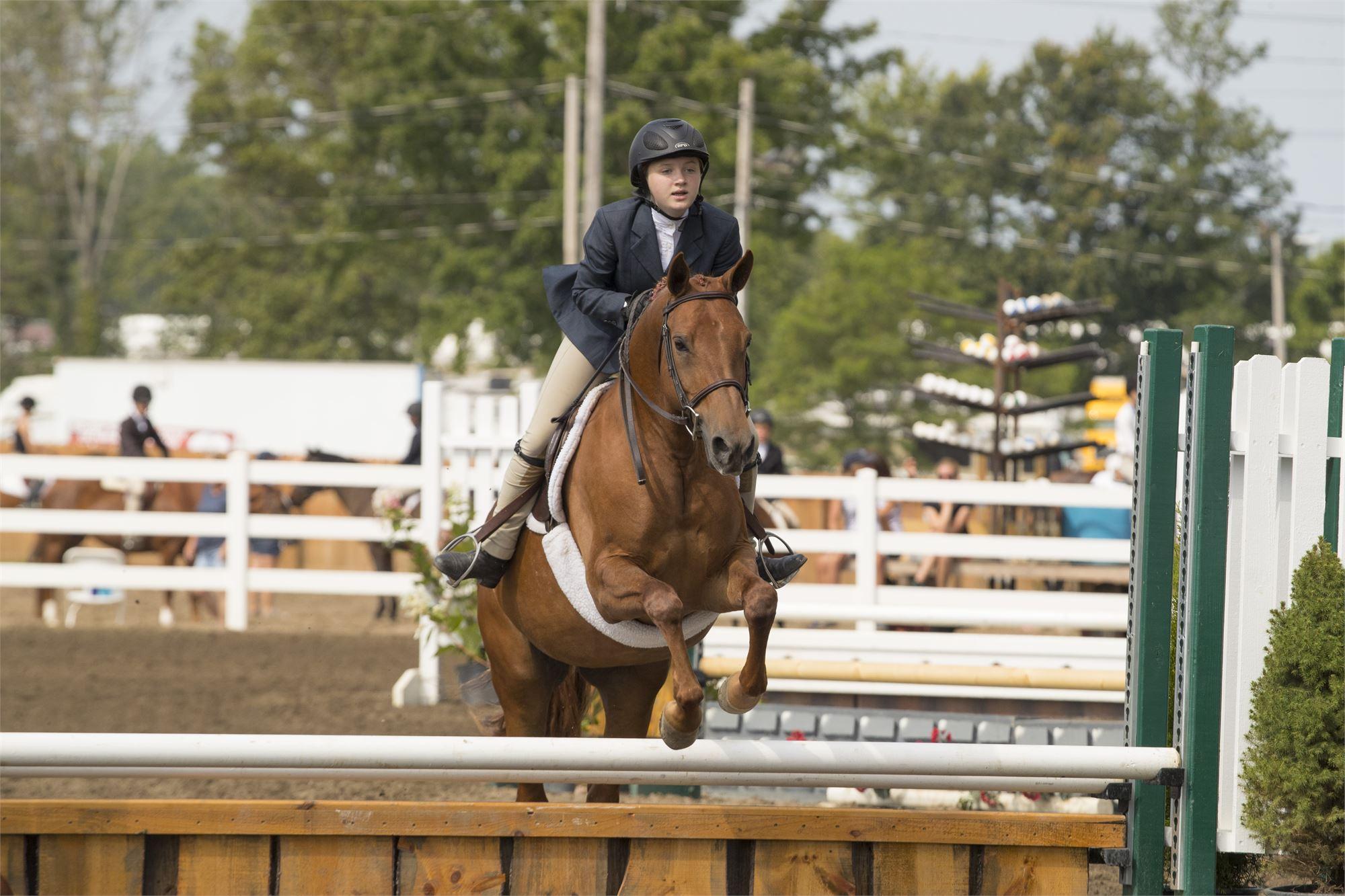 Hunter Jumper horse