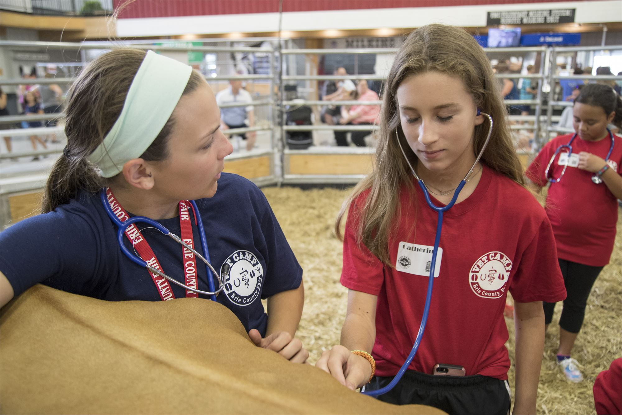 Vet and Student listening to cow heartbeat