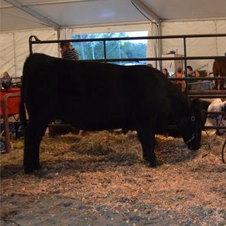 2012 Livestock Shows