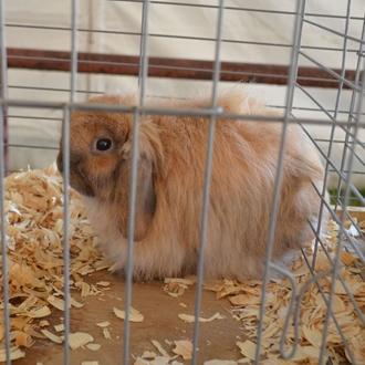 2015 Junior Rabbit