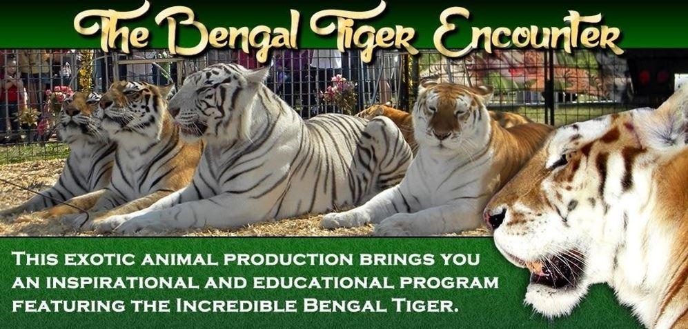 BENGAL TIGER ENCOUNTER