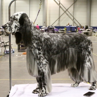 Great Plains Cluster Dog Show