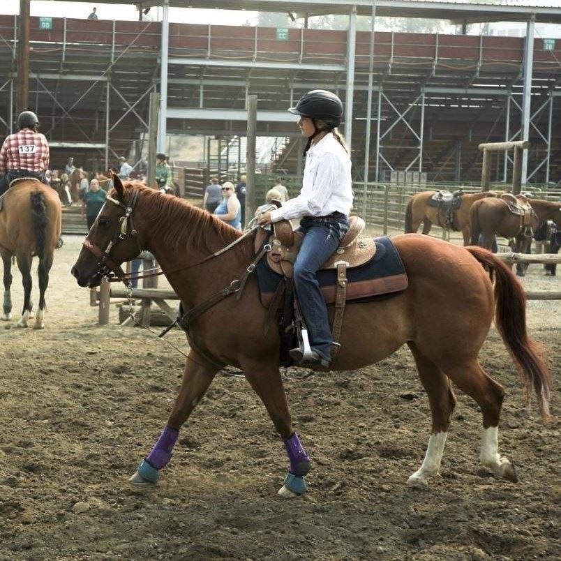 4-H Horse