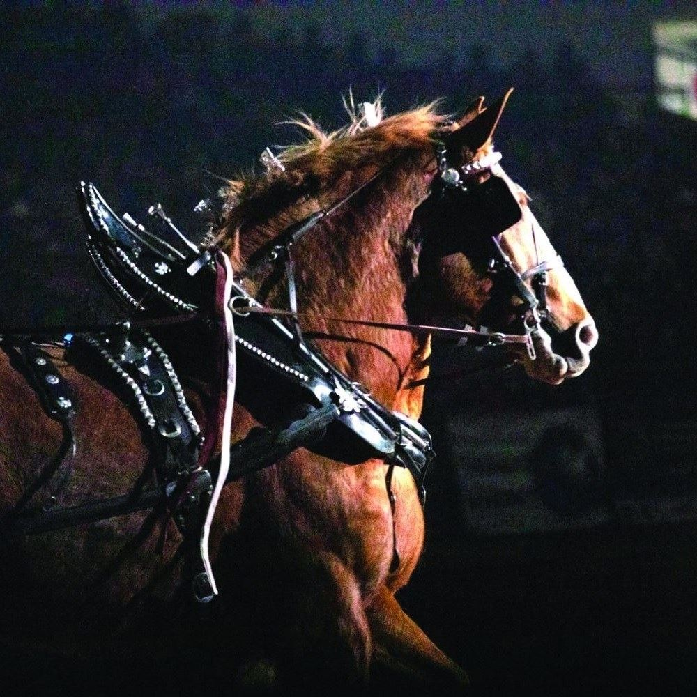 Open Draft Horse