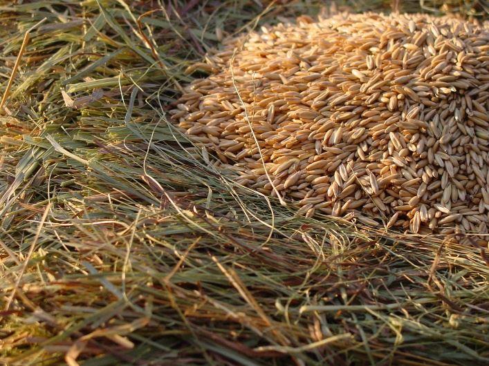 Open Hay, Grain, Forage