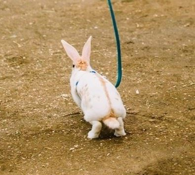 Open Rabbits