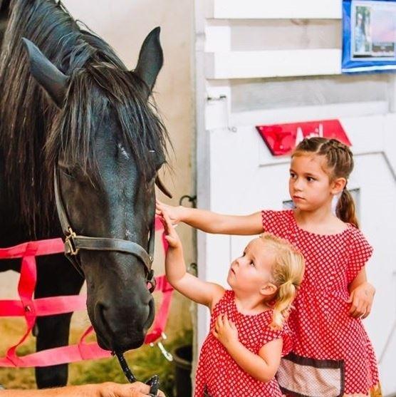 Horse Exhibitor Rules