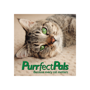 Image of a green-eyed cat with the words