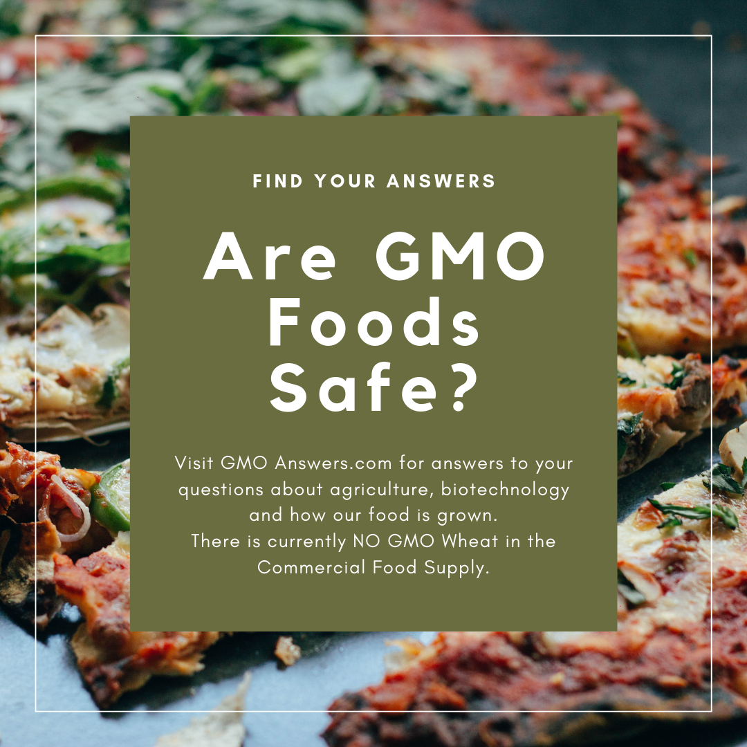 Are GMO Foods really Safe?
