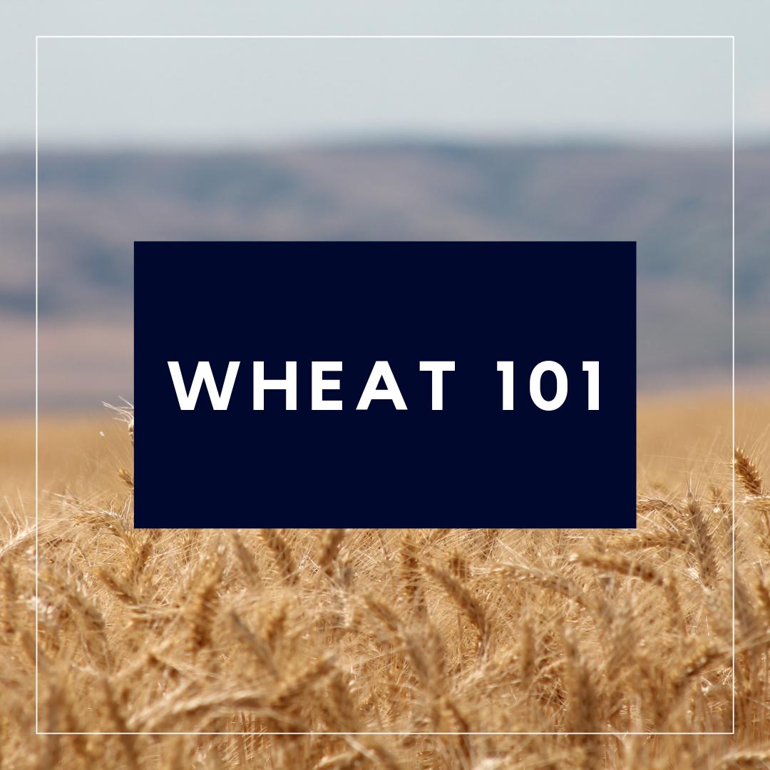 Wheat 101
