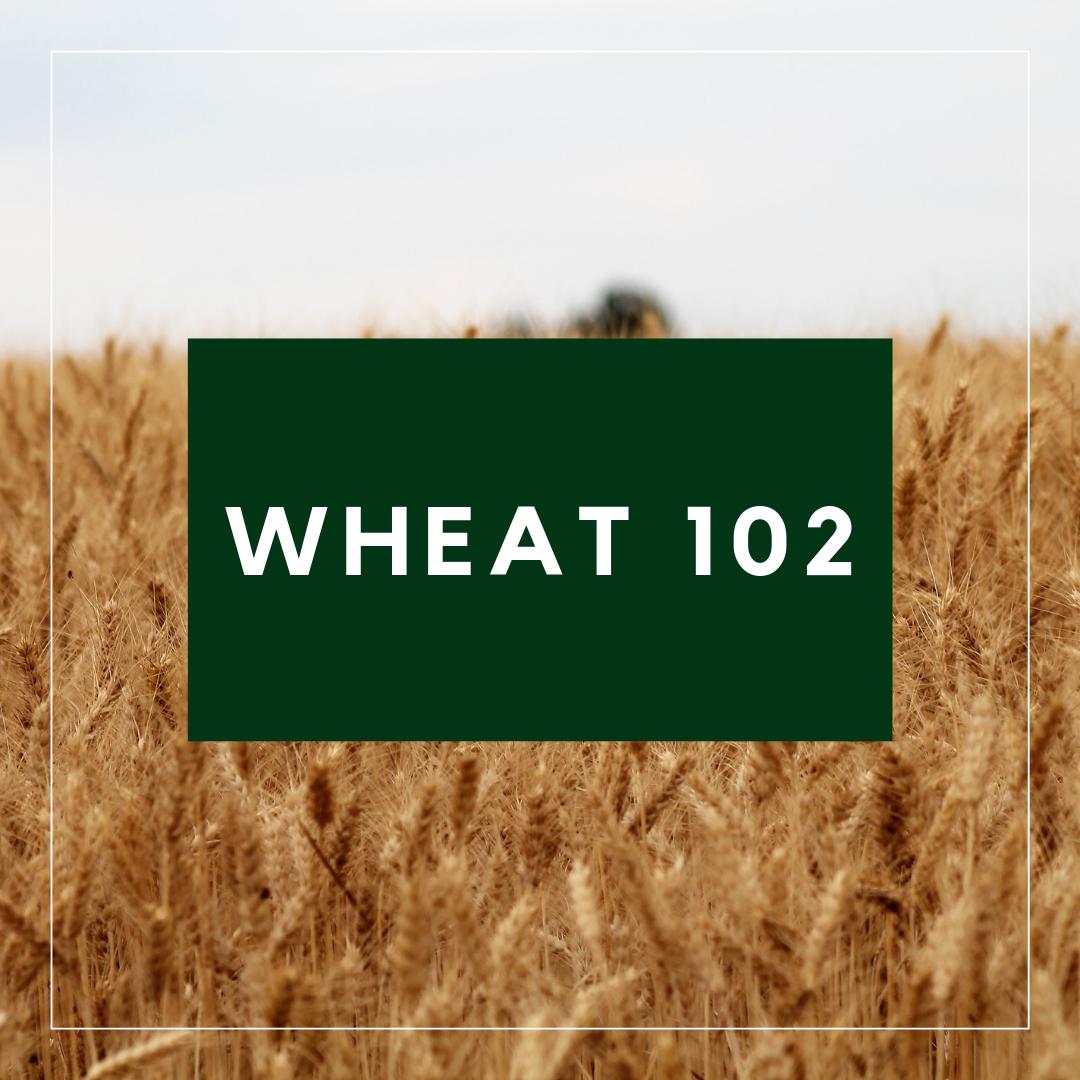 Wheat 102