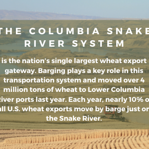 Oregon Wheat Depends on the Columbia and Snake River Dams