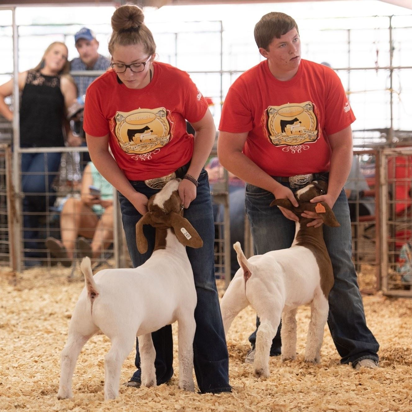 Girl & boy showing red & white goats in an arena