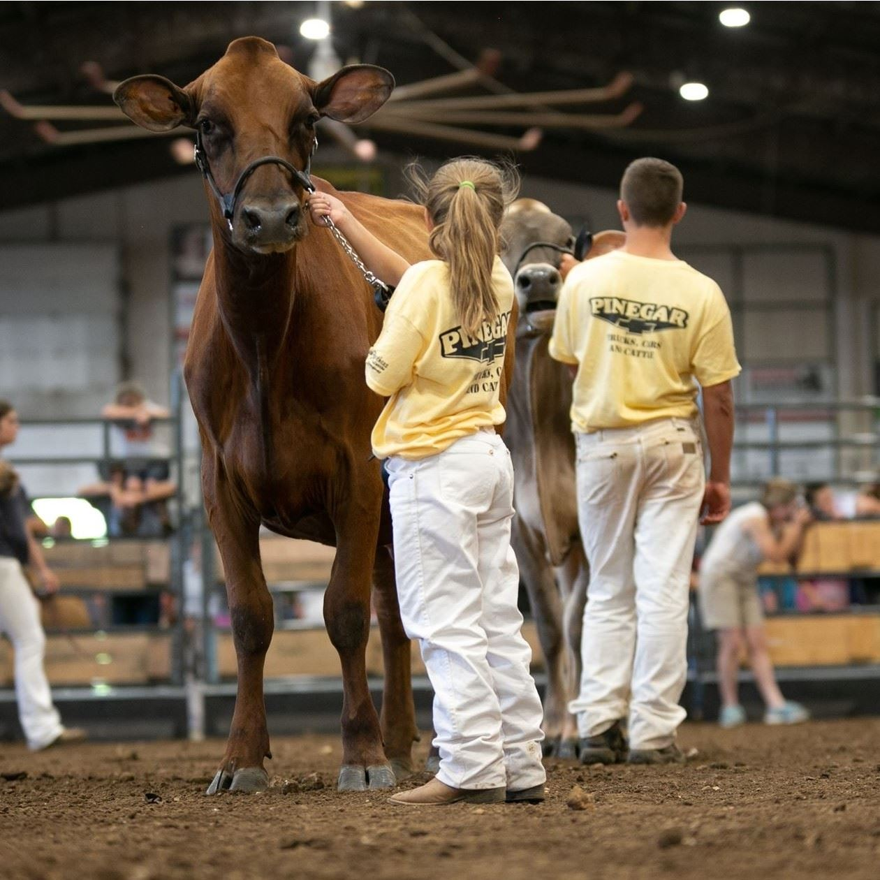Woman winning a banner from a judge while showing a Boer Goat