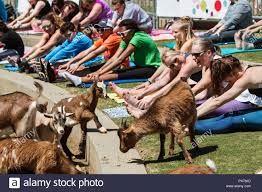 Oh My Goat Yoga