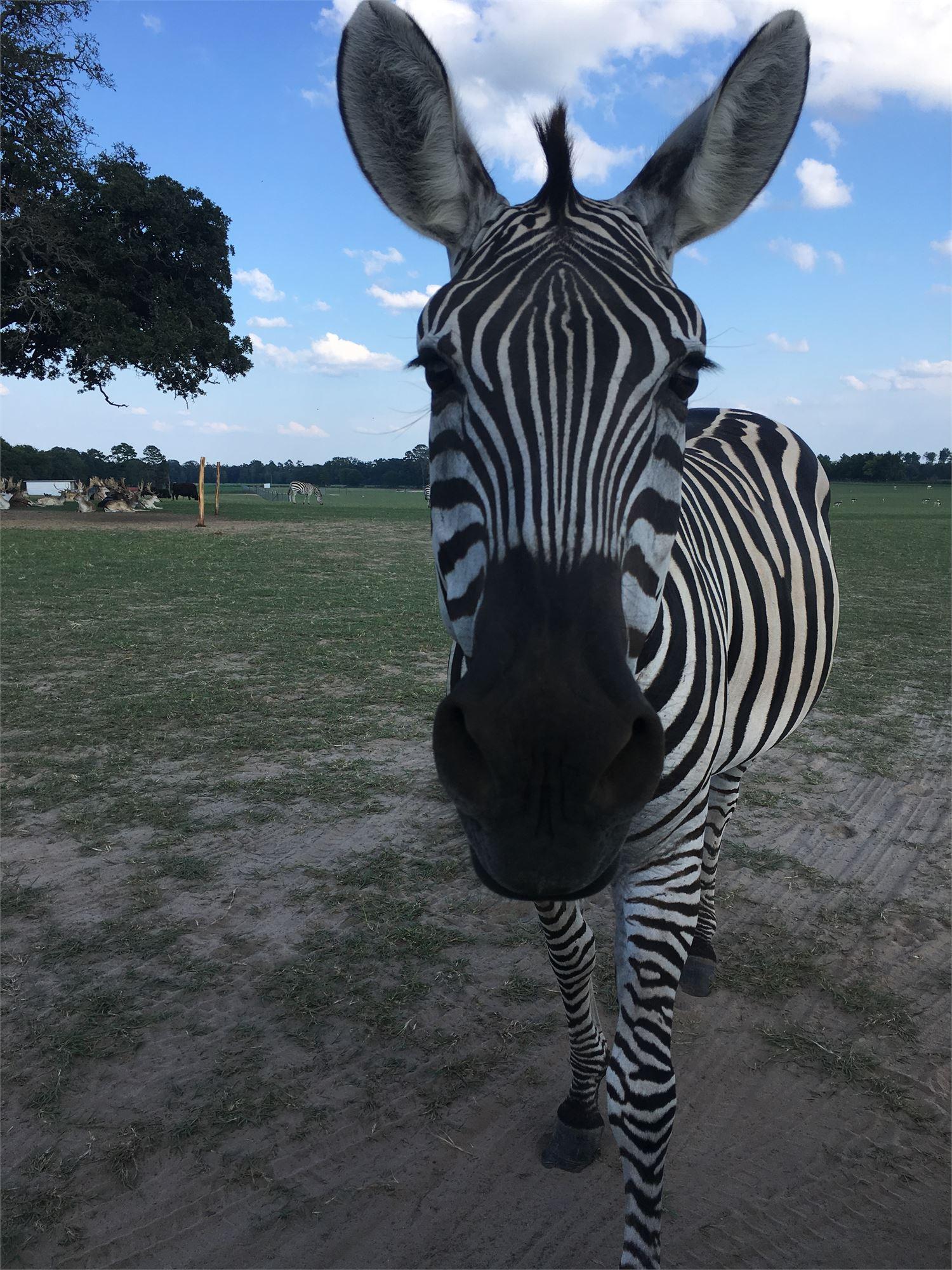 Grapeland Safari