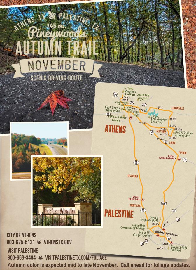 Pineywoods Autumn Trail