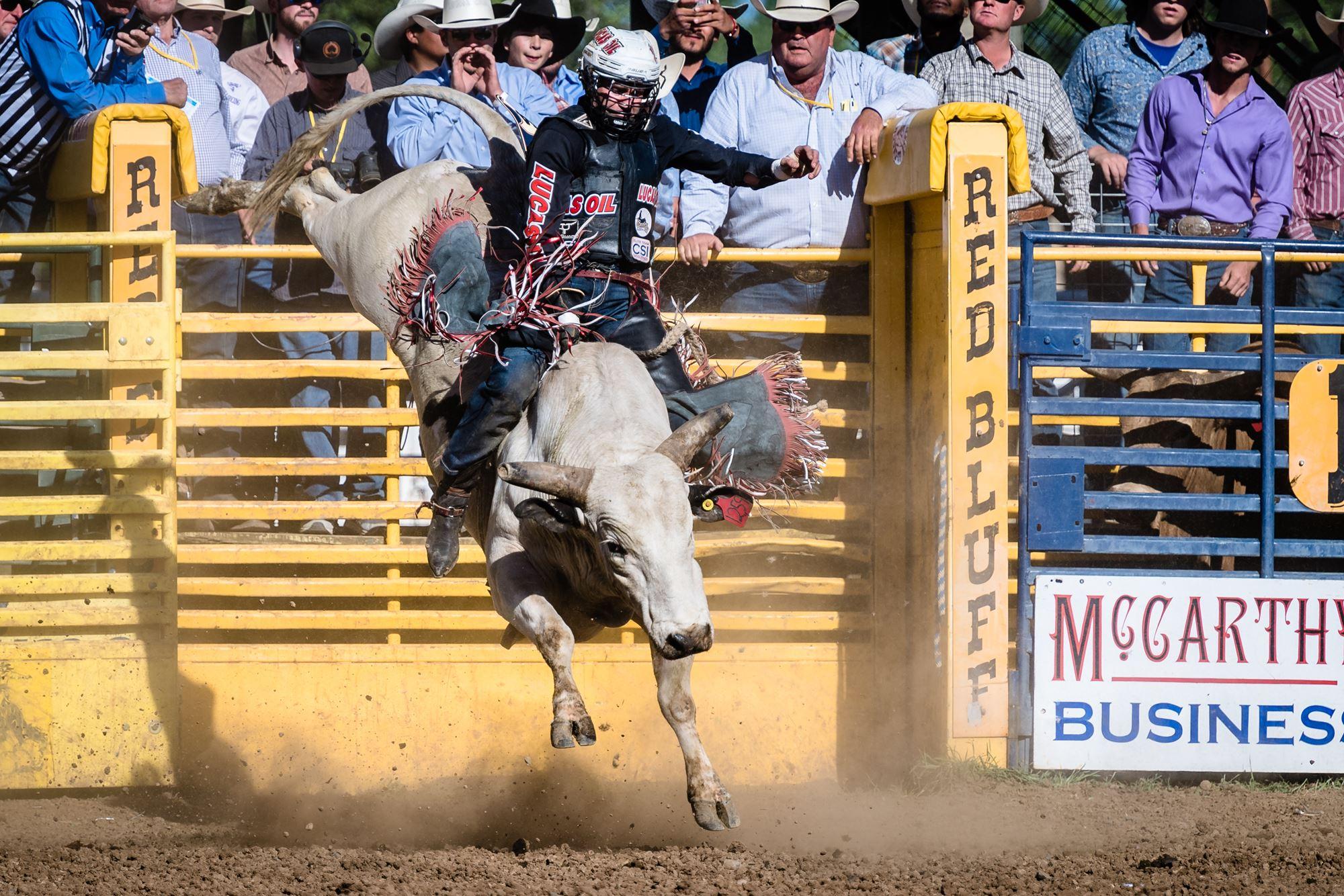 Bull Riding- Shane Proctor