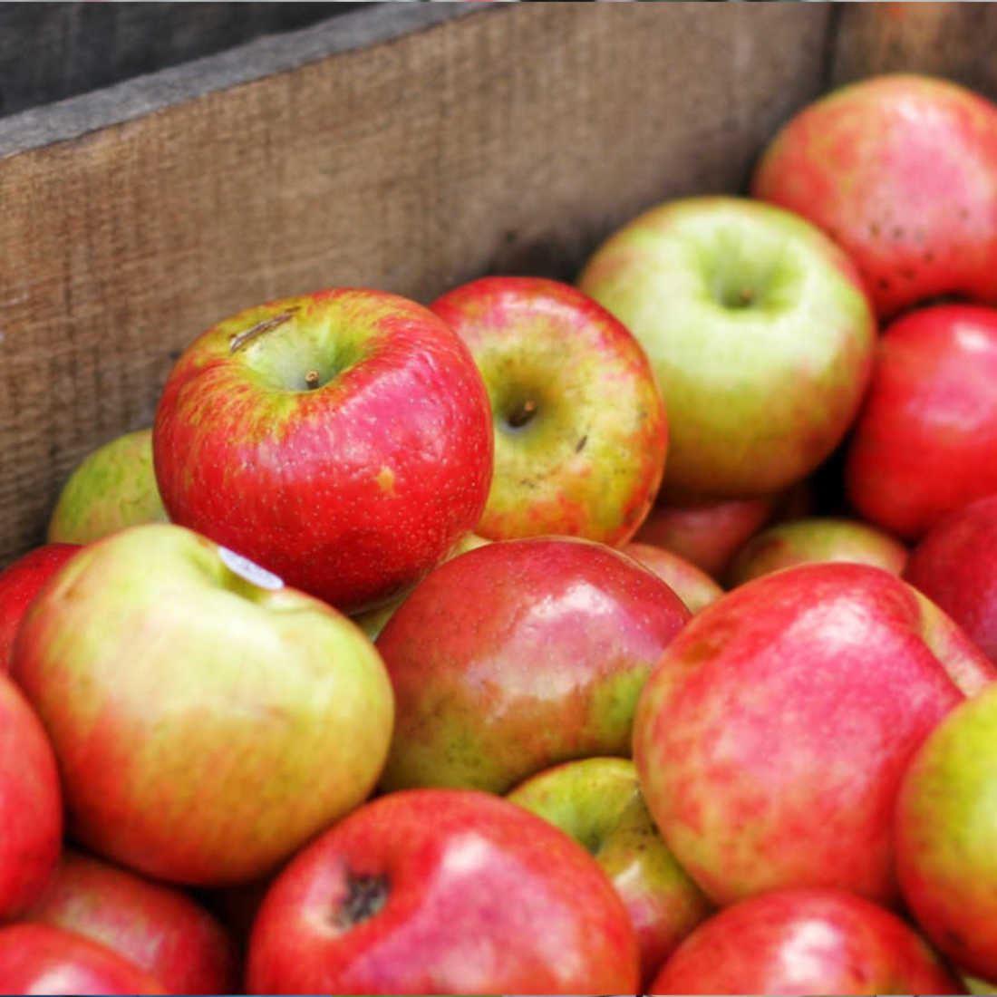 Harvest New England Day