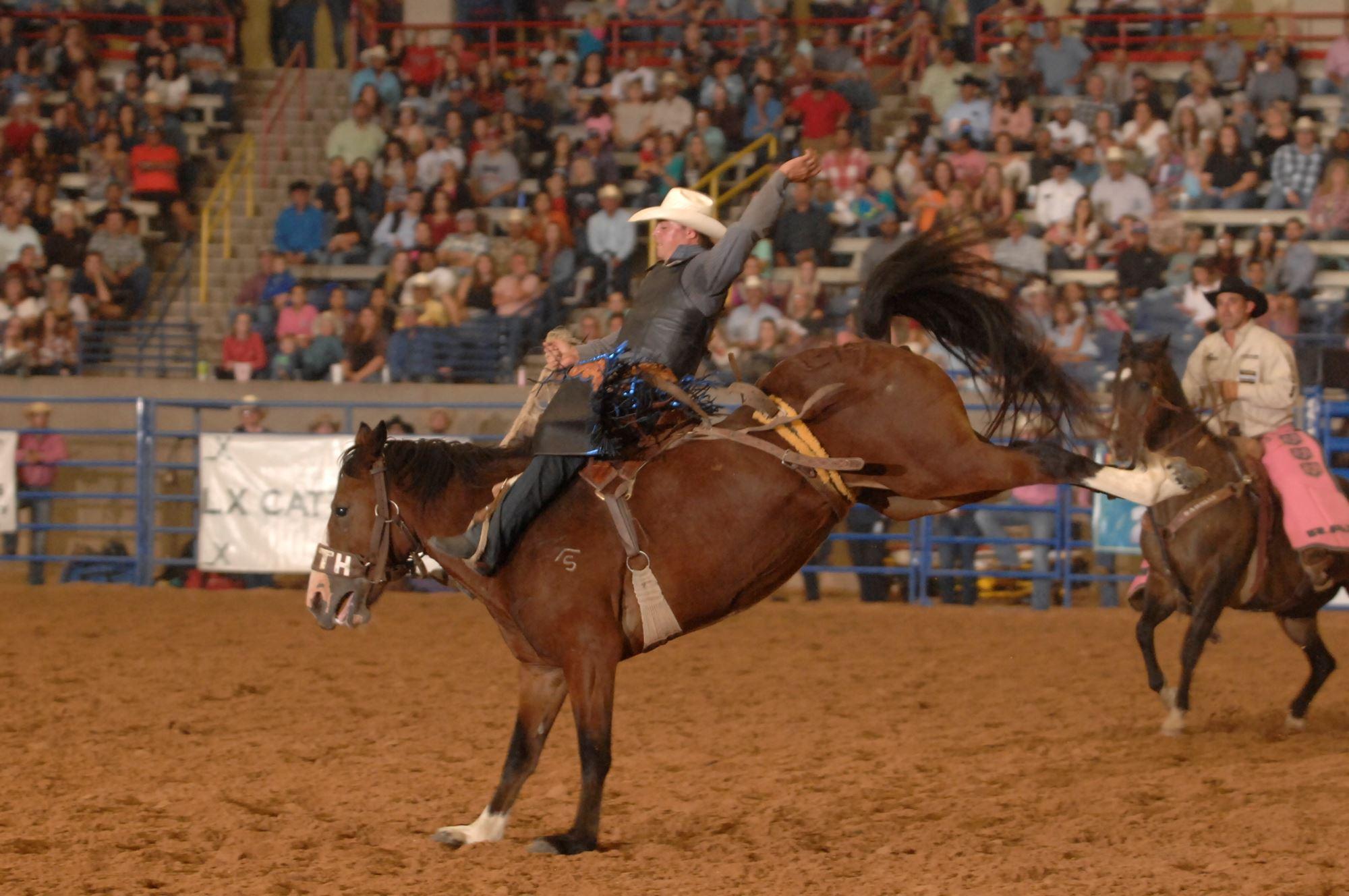 horse, cowboys, dirt, arena, crowd bucking horse