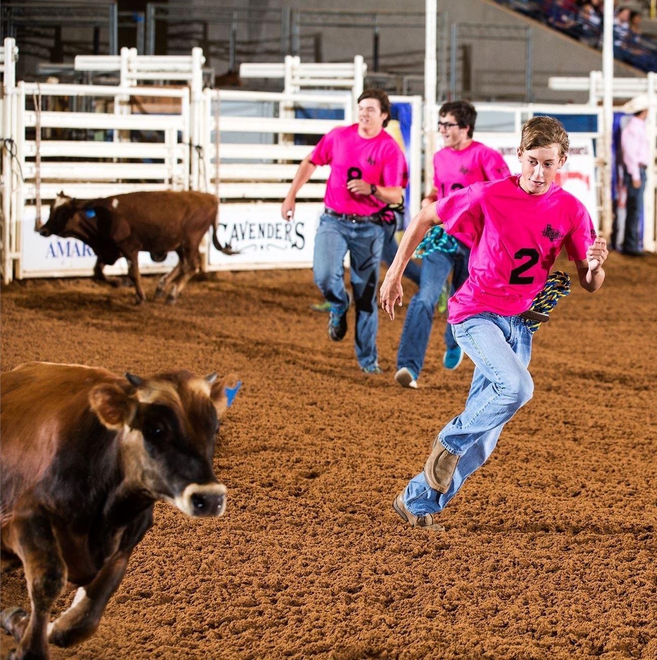 brown calf, dirt, boy running, pink shirt