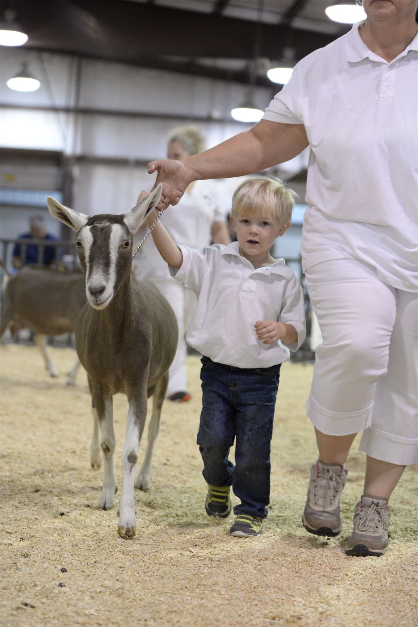 goat, halter, little boy, blue jeans, lady in white