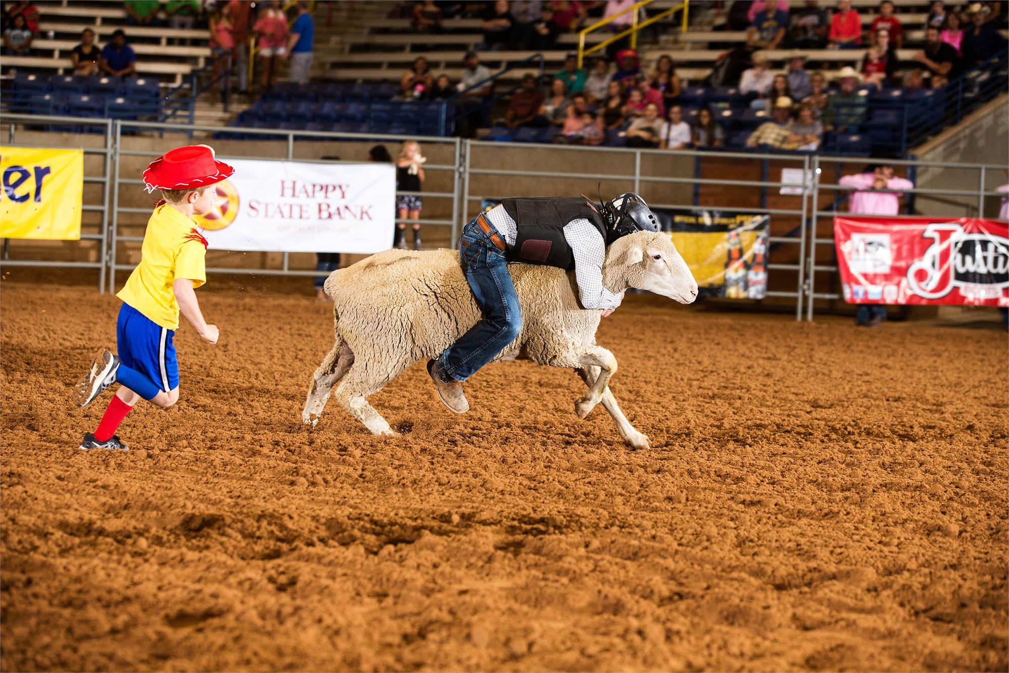 sheep, rider, kids, vest, helmet, dirt, clown, red hat, yellow shirt, blue shorts