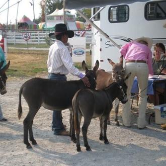 Wilson County Fair - 2007